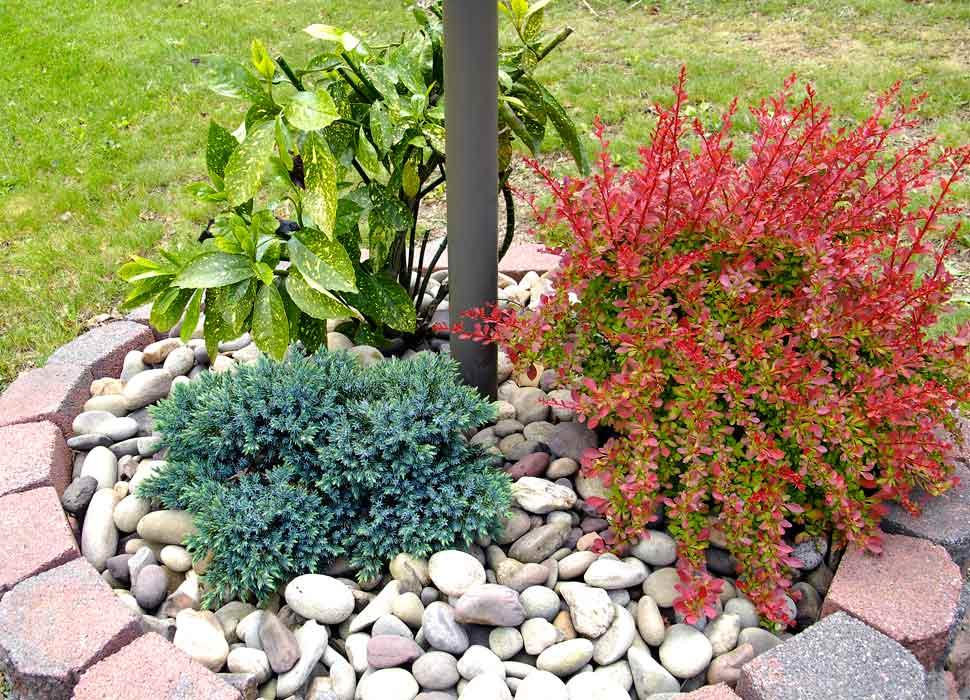 Closeup-front-yard-landscaping