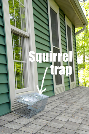Squirrel-trap