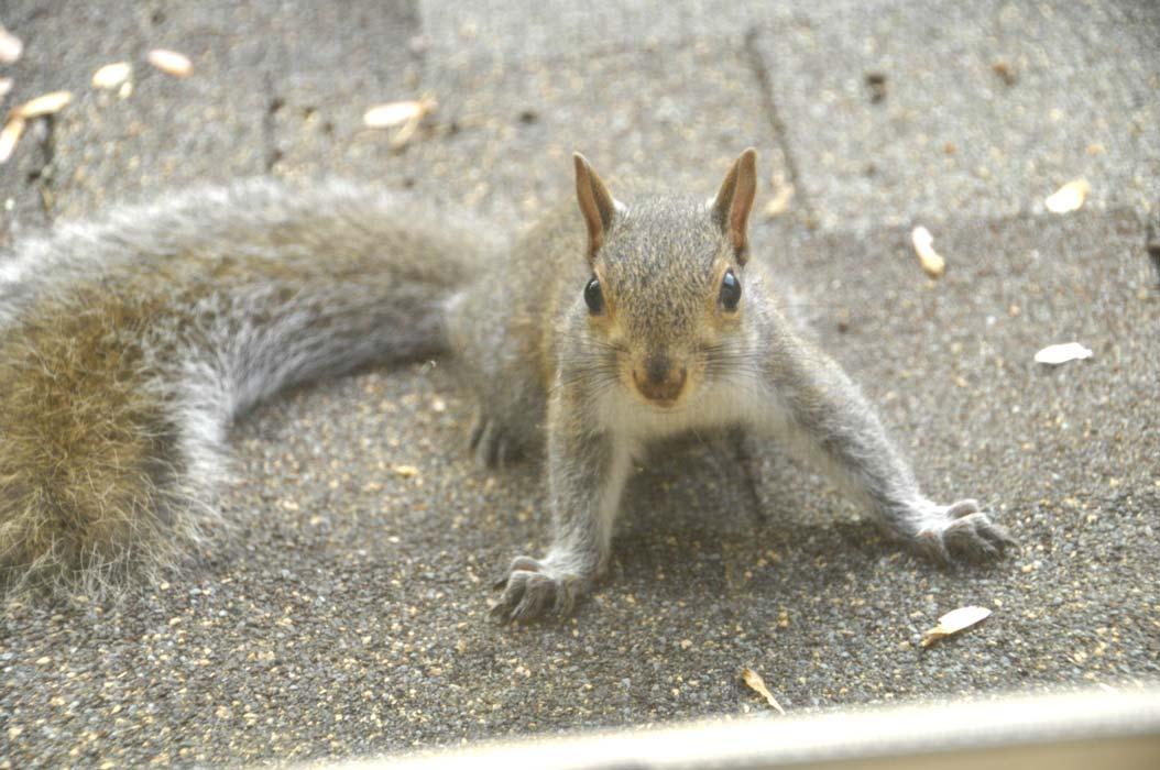Squirrel-update