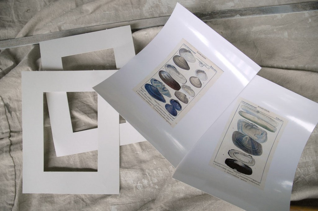 Matting-and-free-prints